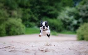freedom - puppy