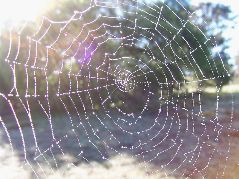 The webs we weave - and other meandering tales
